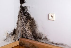 mold remediation new york city